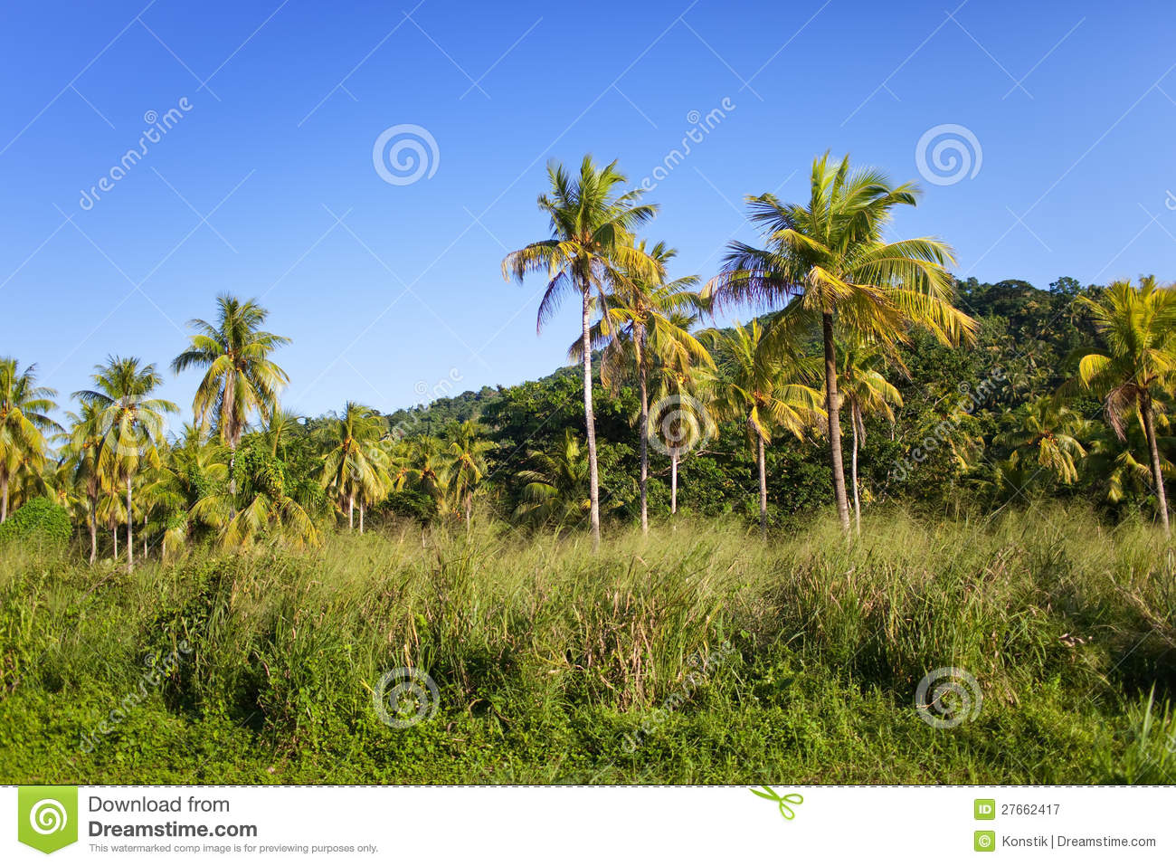 Jamaica tropical nature landscape royalty free stock photography