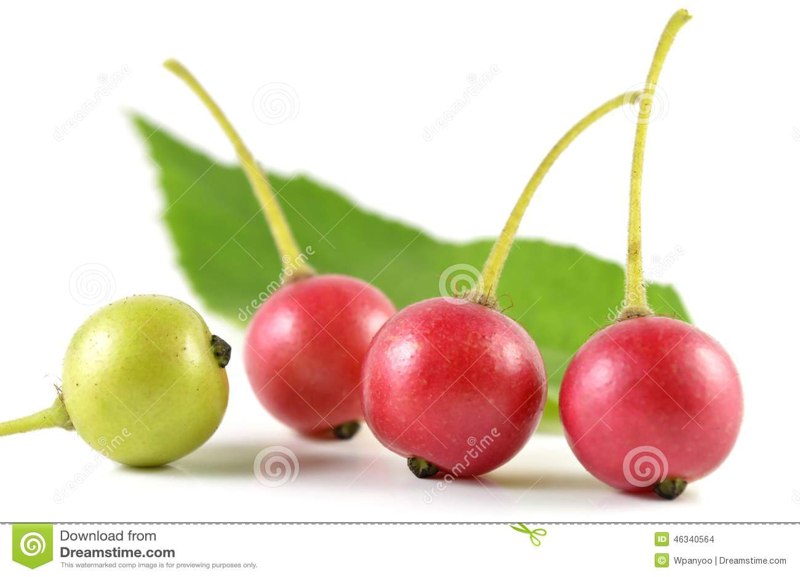 The Jamaican Cherry - InsideJourneys