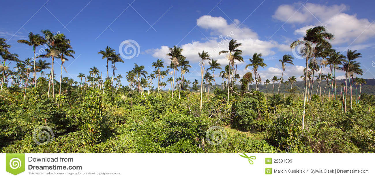 jamaican jungle royalty free stock images