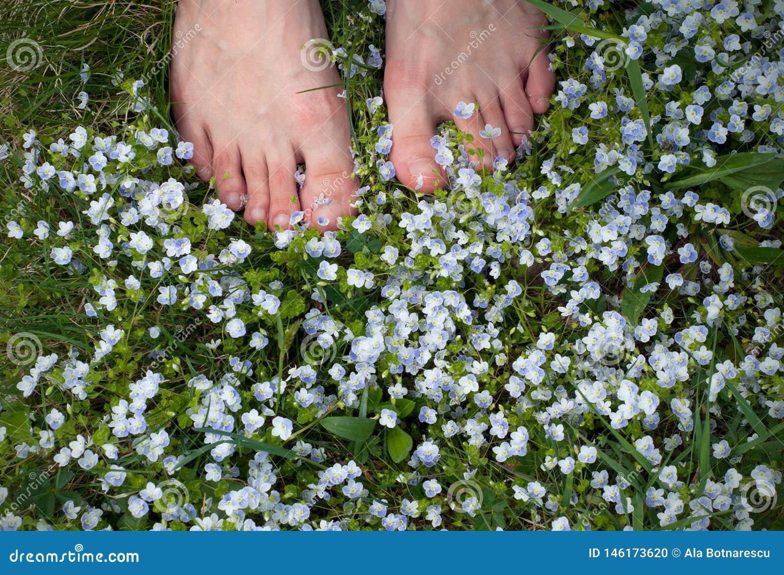 Jambes de femme sur un champ avec de petites fleurs bleues Pieds nus de femme sur l herbe de ressort et le gisement de fleurs