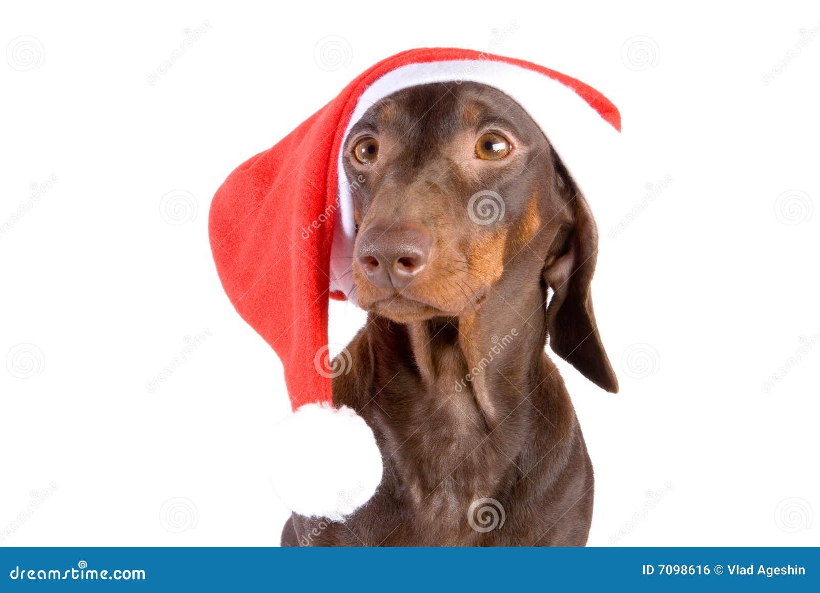 Jamnik Santa