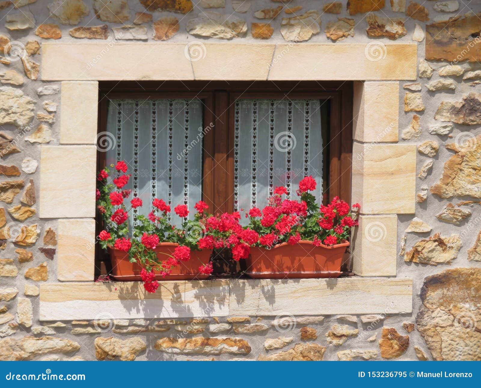 Janela de madeira bonita decorada com as flores vermelhas de cores intensas