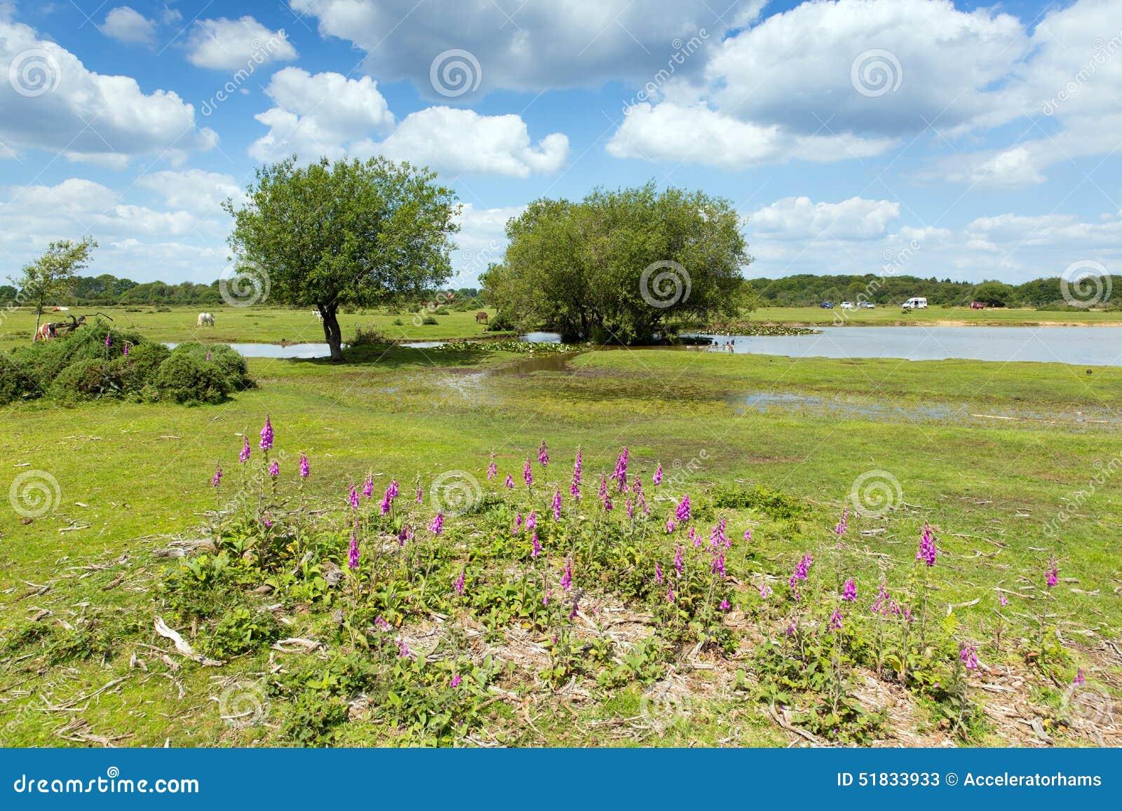 Janes hed nytt Forest Hampshire England UK för sjö populärt turist- läge