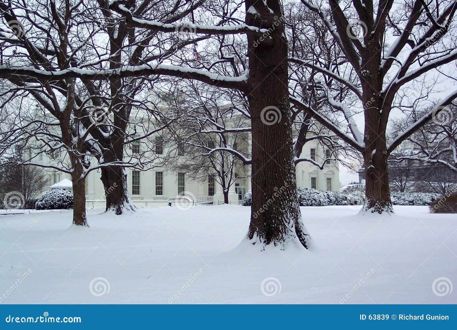 Download Janvier à La Maison Blanche Image stock - Image du arbre, états: 63839
