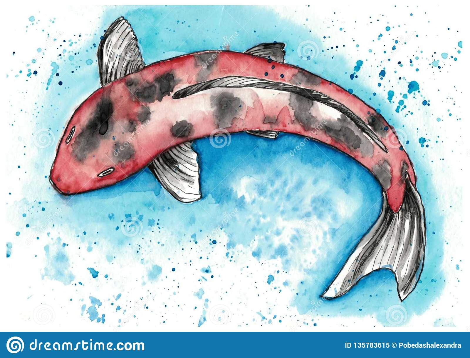 Watercolor koi stock illustration. Illustration of pond - 135783615