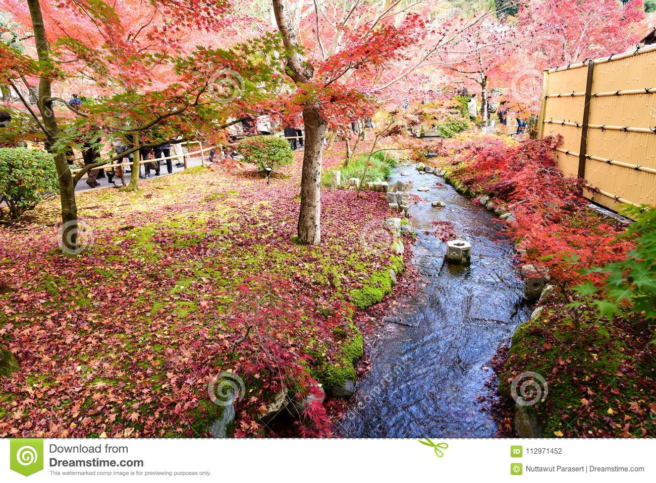 Japan Red Maple Leaves In Japanese Garden, Eikando Temple Kyoto ...