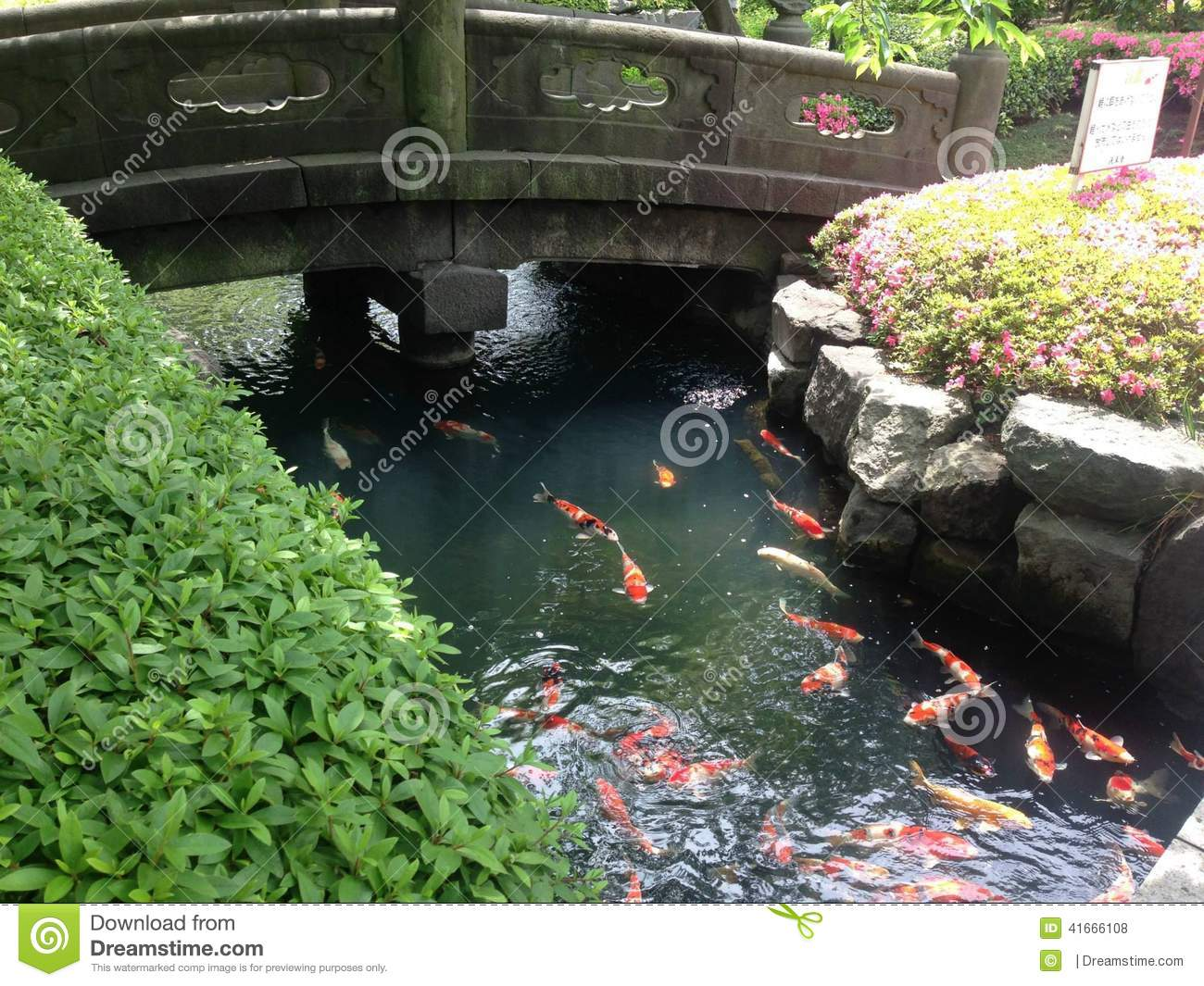 Japanese carp garden koi pond stock photo image 41666108 for Japan koi fish pond