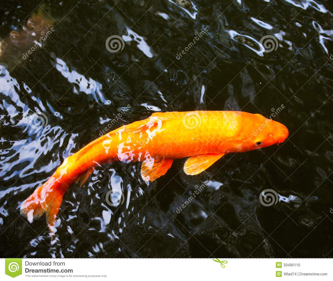 Japanese Carp In A Pond Stock Photo Image 33495110