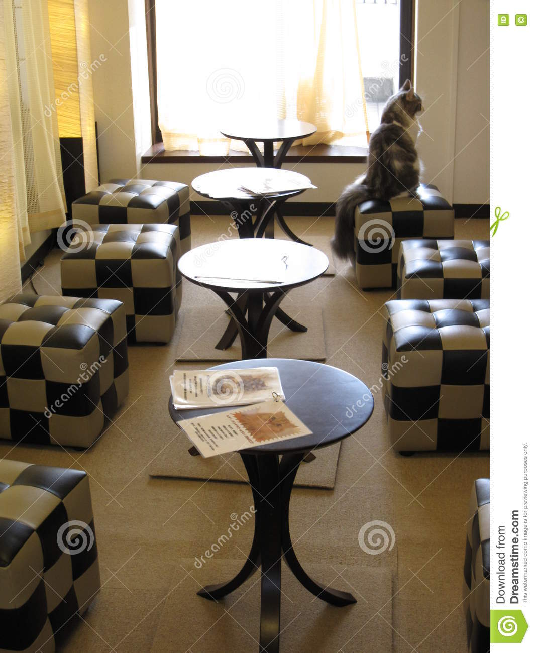 Japanese Cat Cafe With Chairs And Tables Stock Photo Image Of White Tokyo 74725892