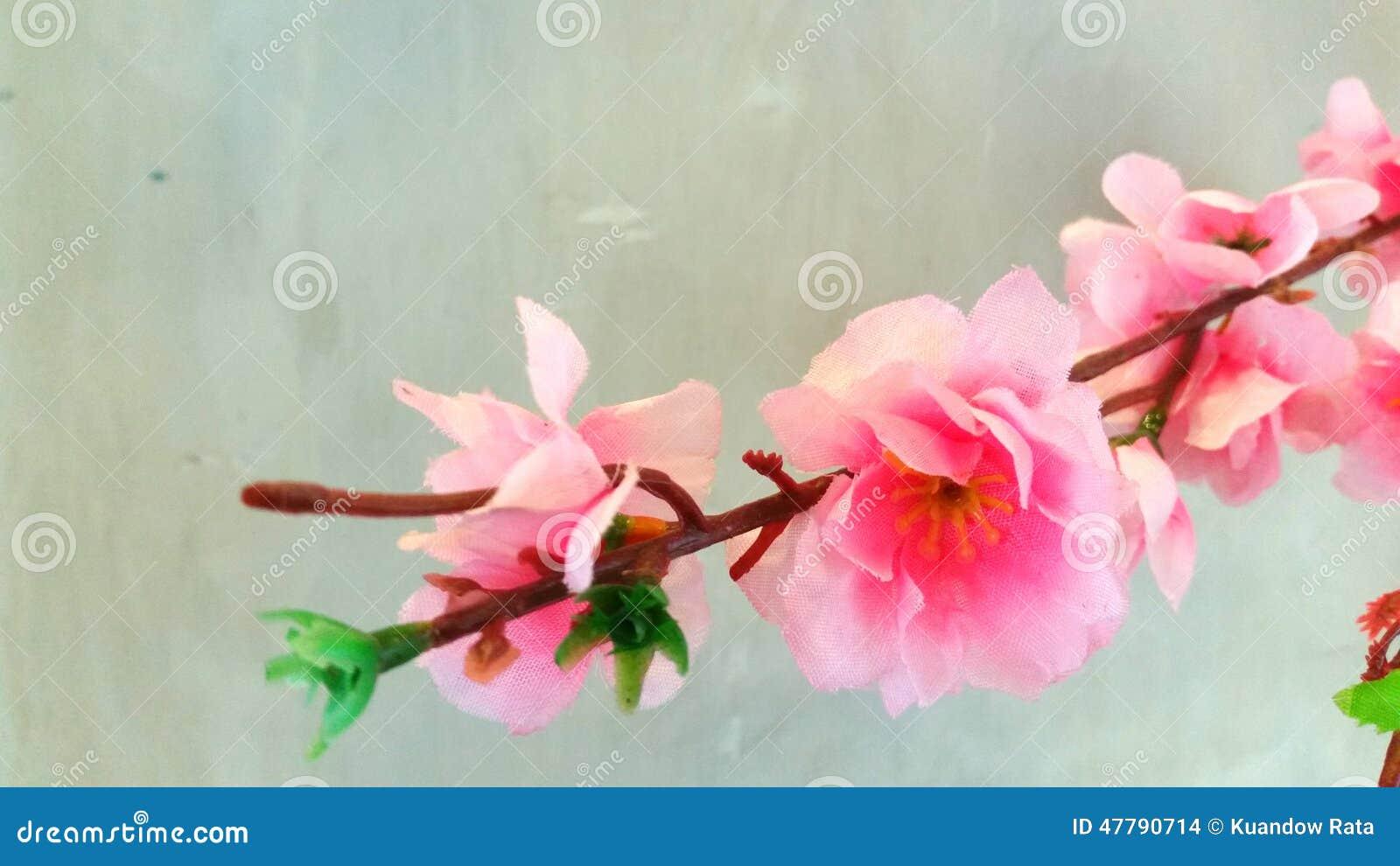 Cherry blossom choice cuts