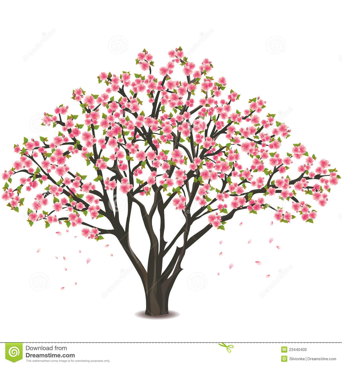Japanese Cherry Tree Blossom Over White Stock Photo - Image: 23440400