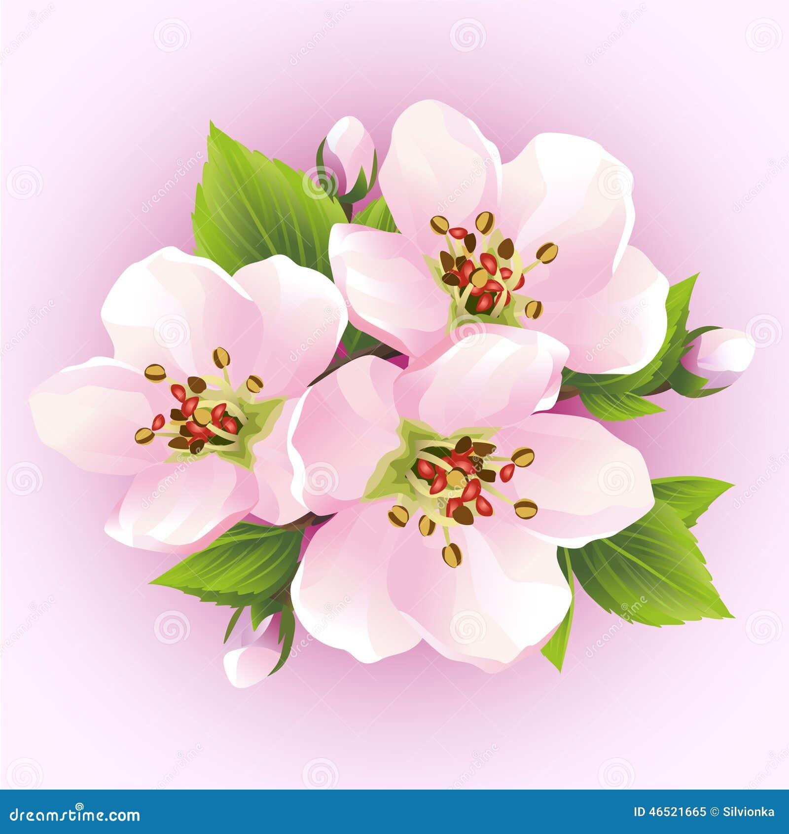 Sakura Tree Drawing Wallpaper