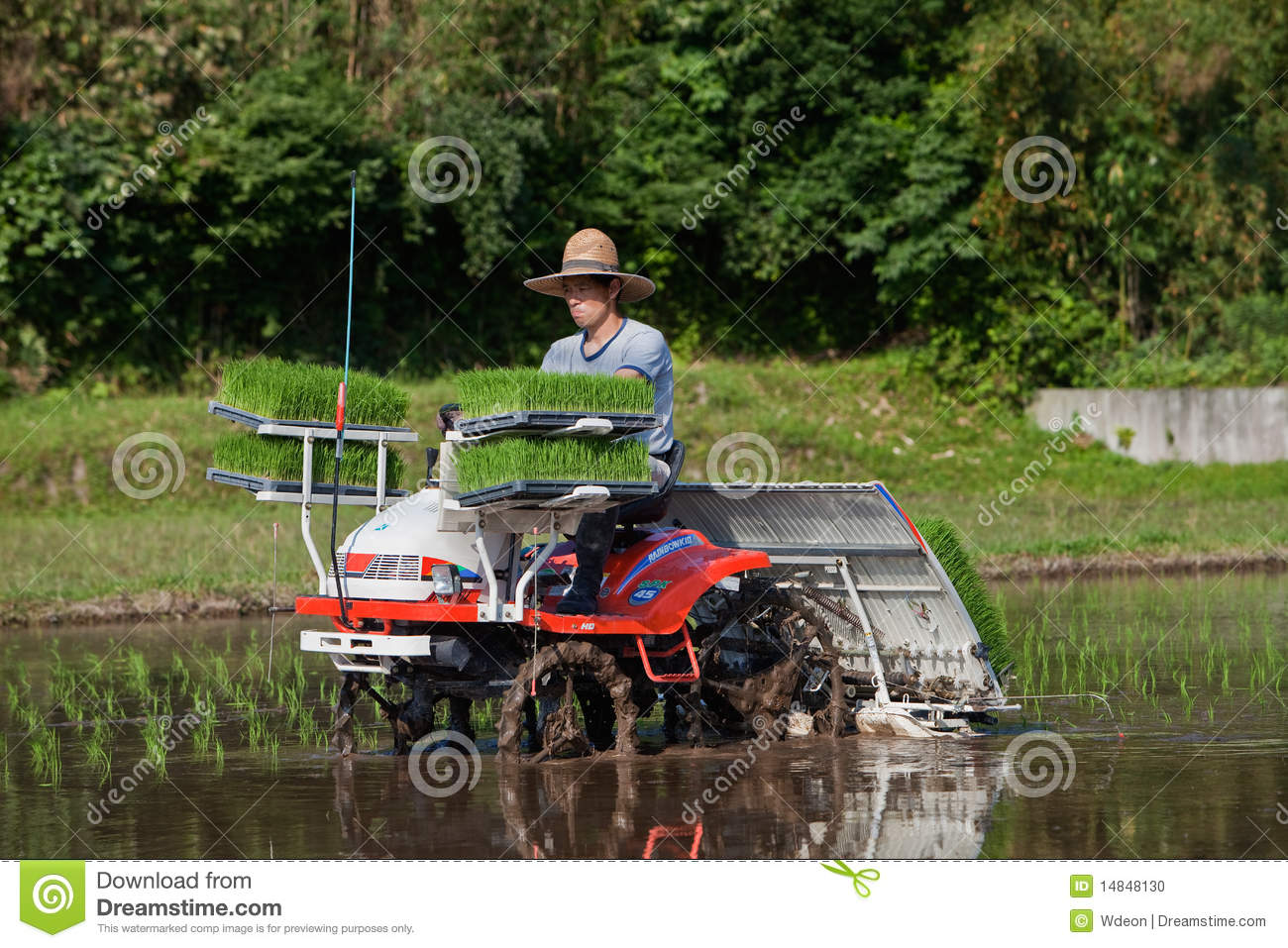 Japanese farmer planting a rice field by tractor