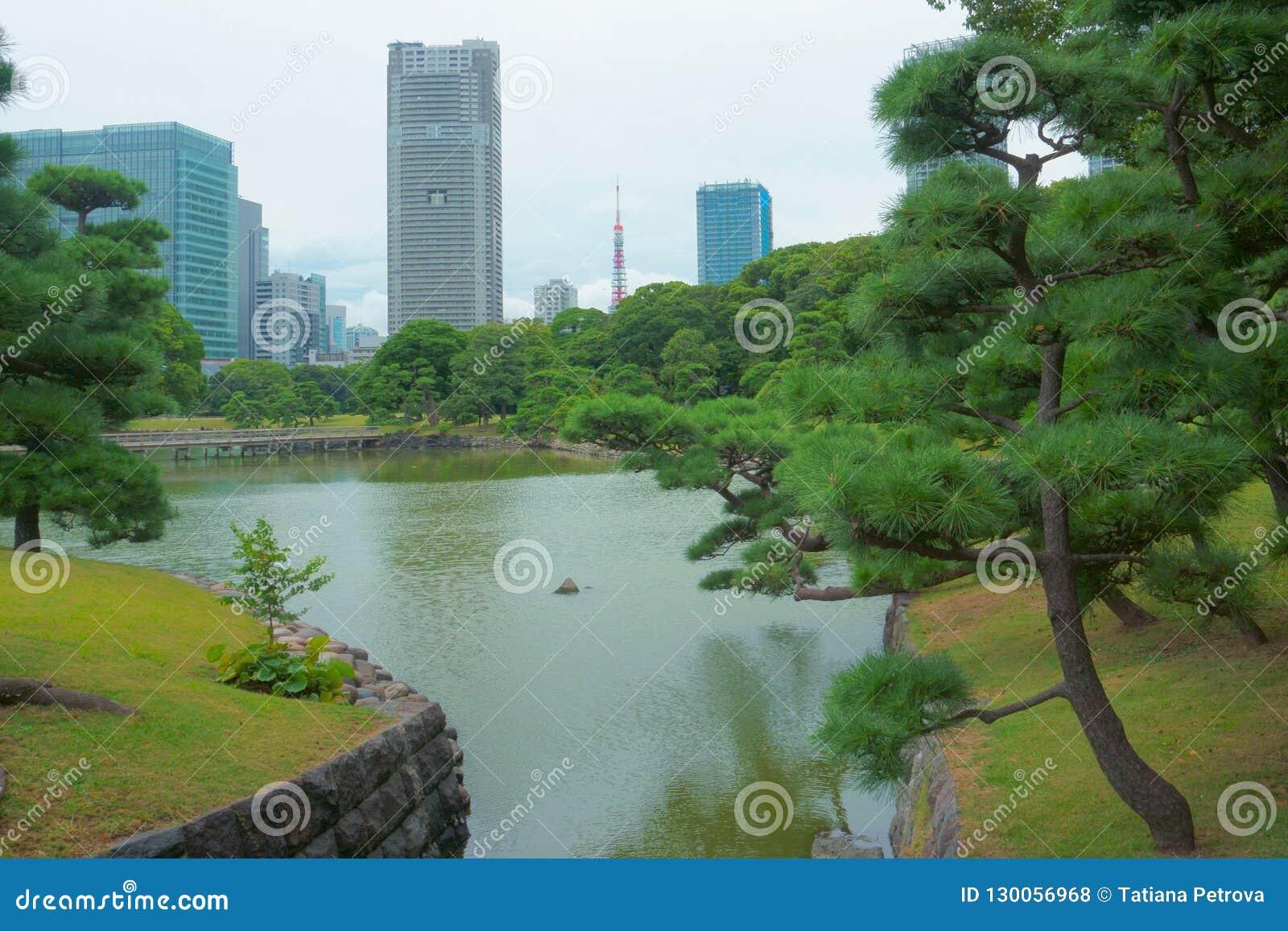Japanese garden on the background of modern buildings