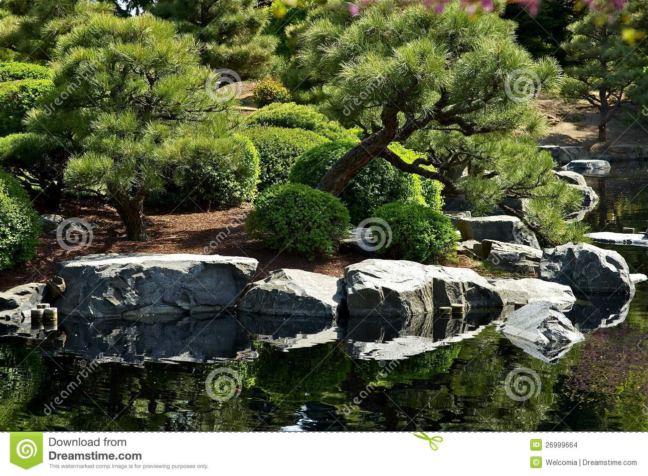 Japanese garden with pond stock photo image of pines for Japanese pond garden