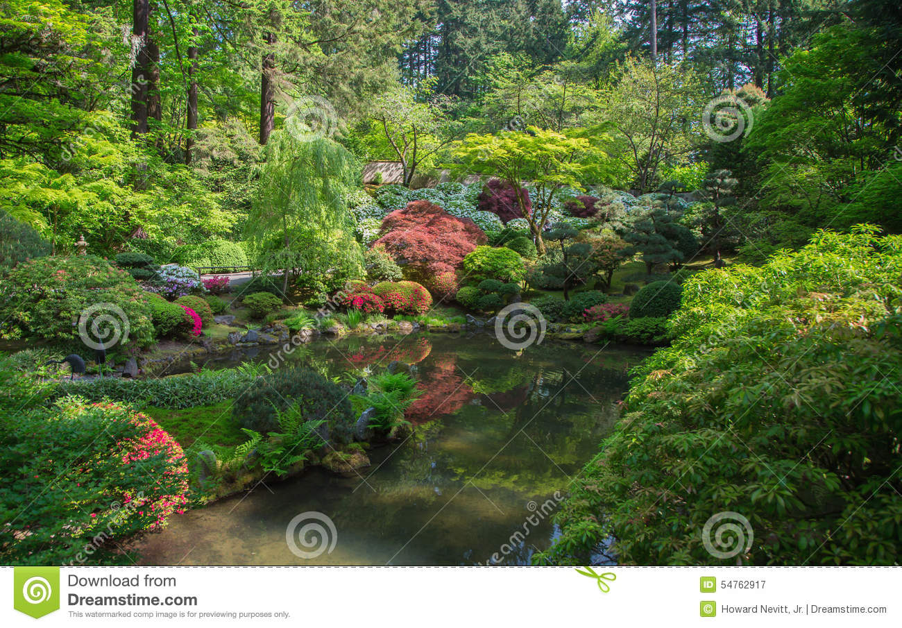 Japanese garden pond for Portland japanese garden koi