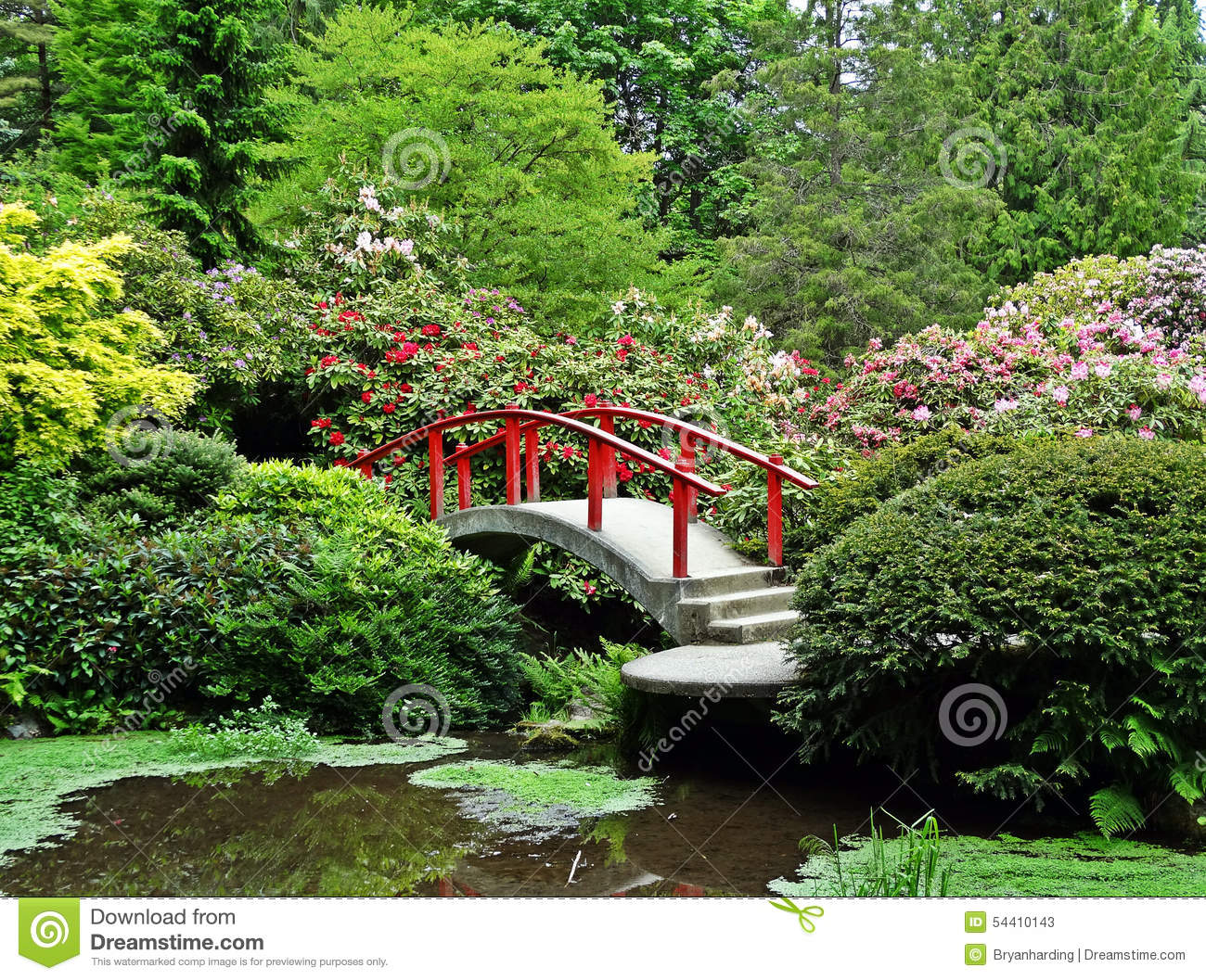 Japanese Garden Red Bridge Flower Bushes Stock Image