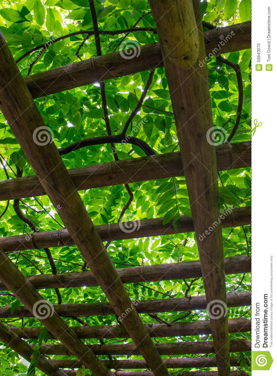 Japanese garden trellis stock photo image of canopy for Japanese garden structures wood