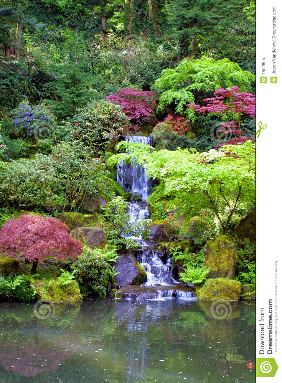 koi garden by japanese gardens waterfall portrait stock image image