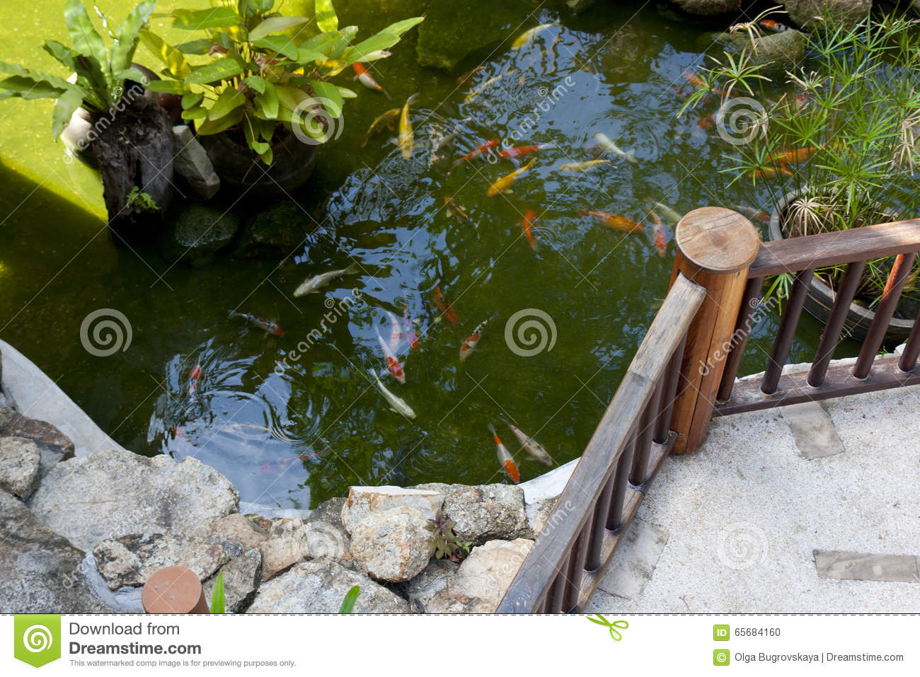 Japanese koi carp stock photo image 65684160 for Artificial fish pond