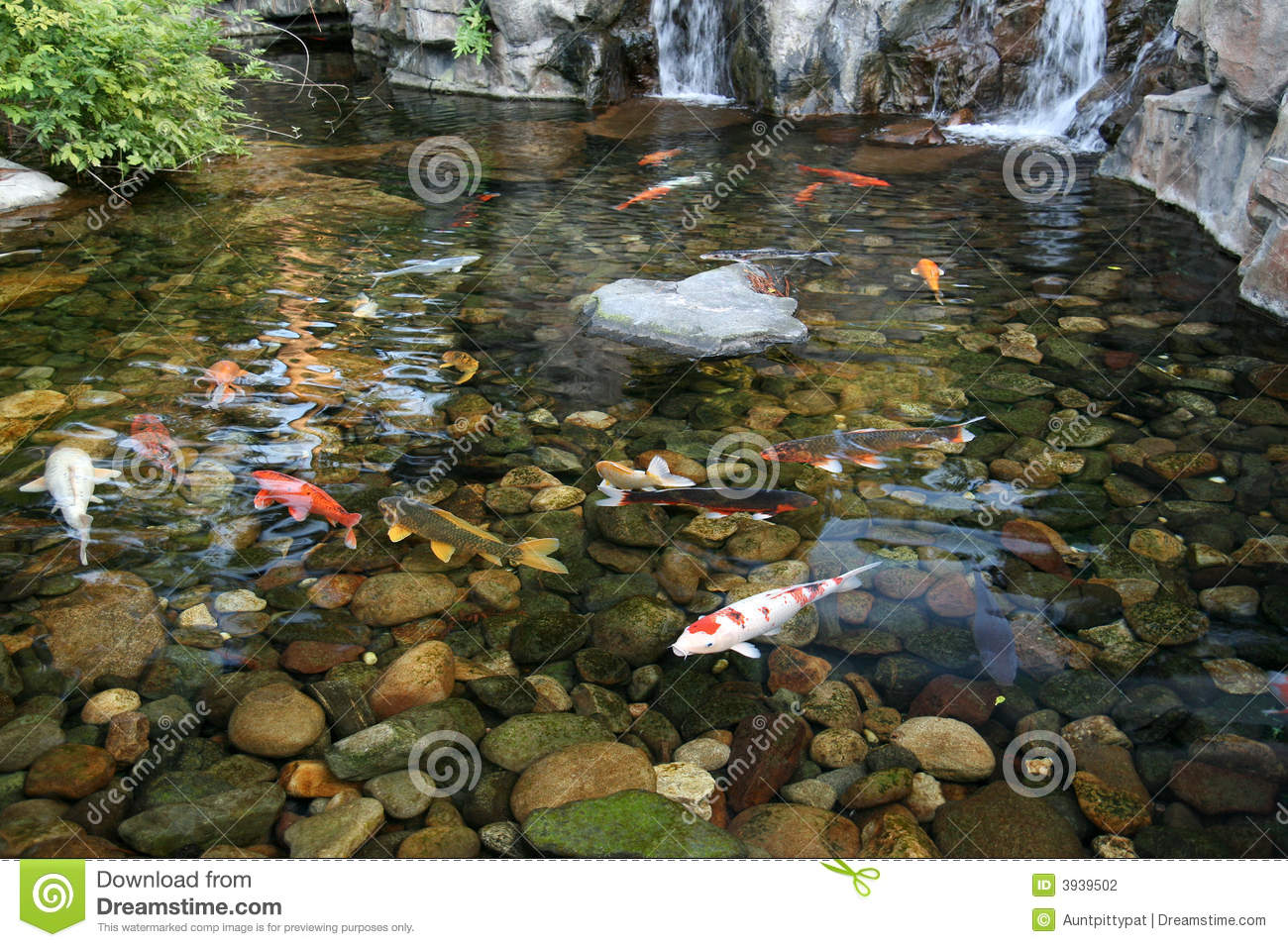 Japanese koi fish pond stock photo image of stones for Japanese koi carp fish