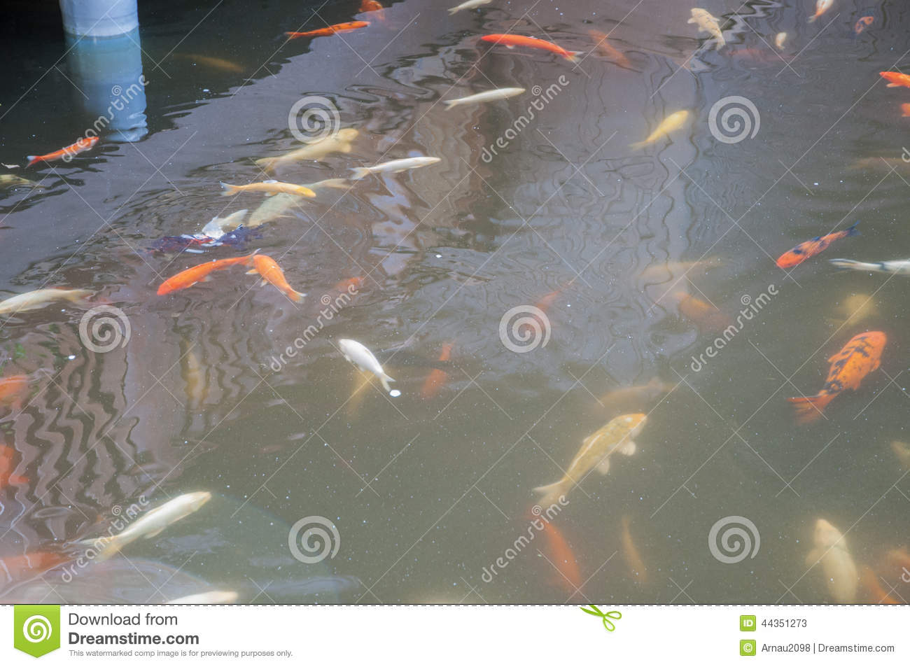 In a japanese koi pond stock photo image 44351273 for Koi pond maker