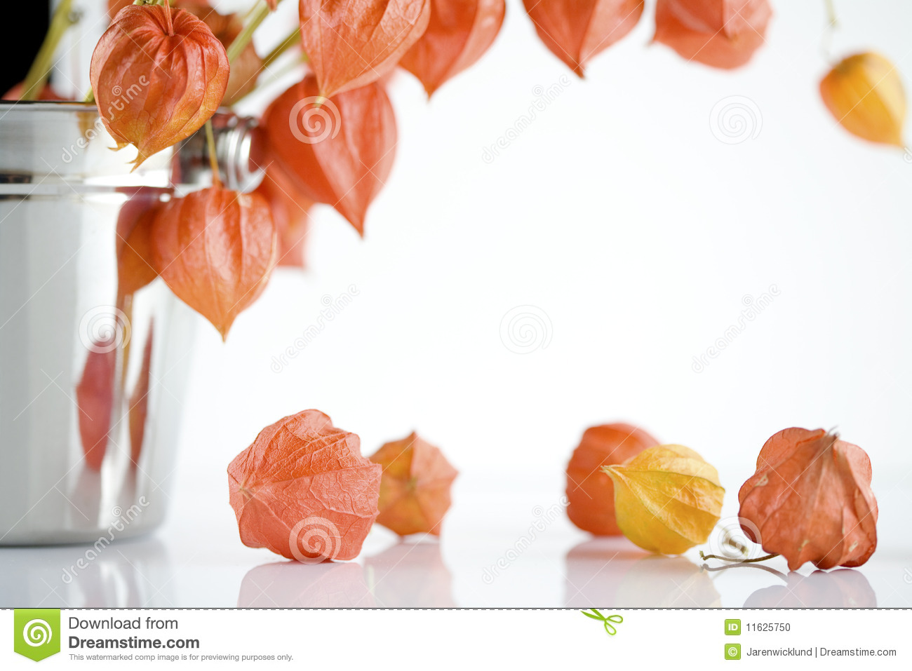 japanese lantern flowers stock photos  image, Beautiful flower