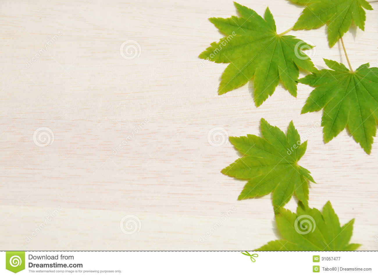 Japanese maple leaves royalty free stock photography Japanese maple leaf