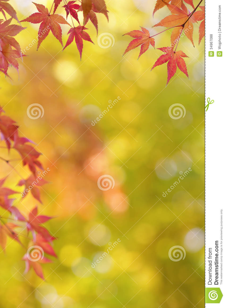 Japanese Maple Tree Leaves Colorful Background In Autumn
