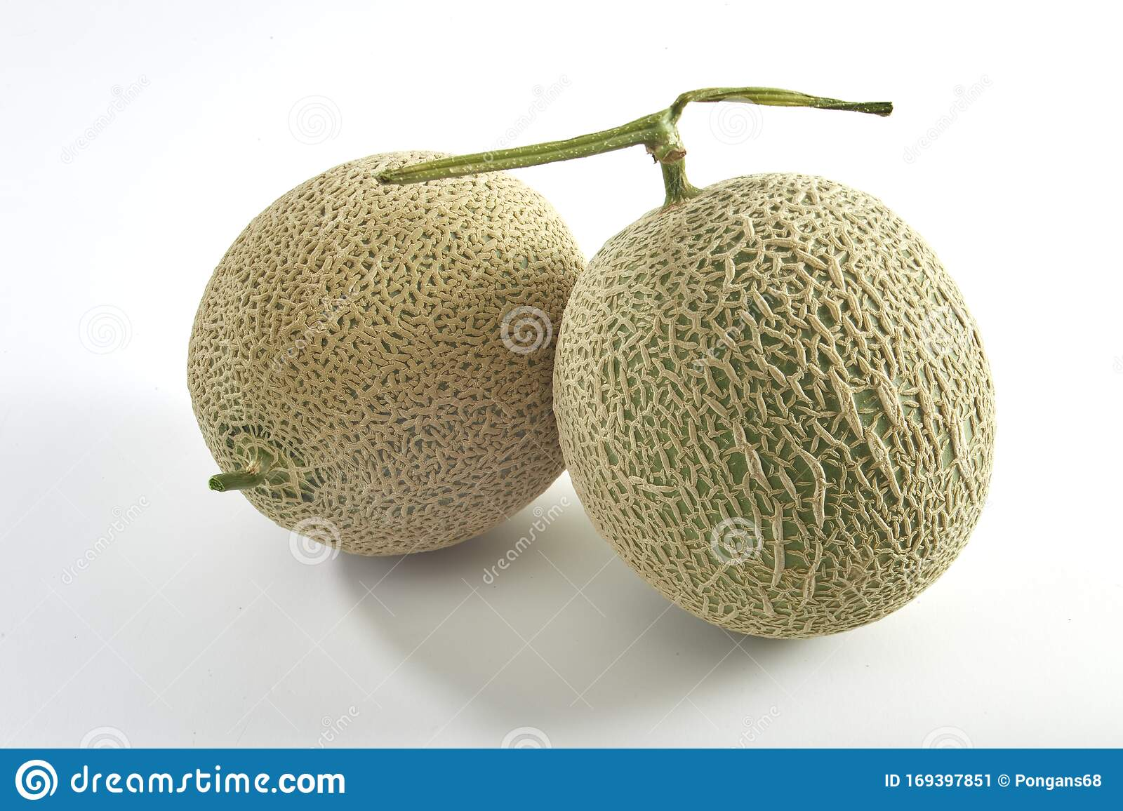 Cantaloupe Melon Isolated On White Background Stock Image Image Of Healthy Nutrition 169397851 It is because of those particular nutrients that we are able to live a longer life. dreamstime com