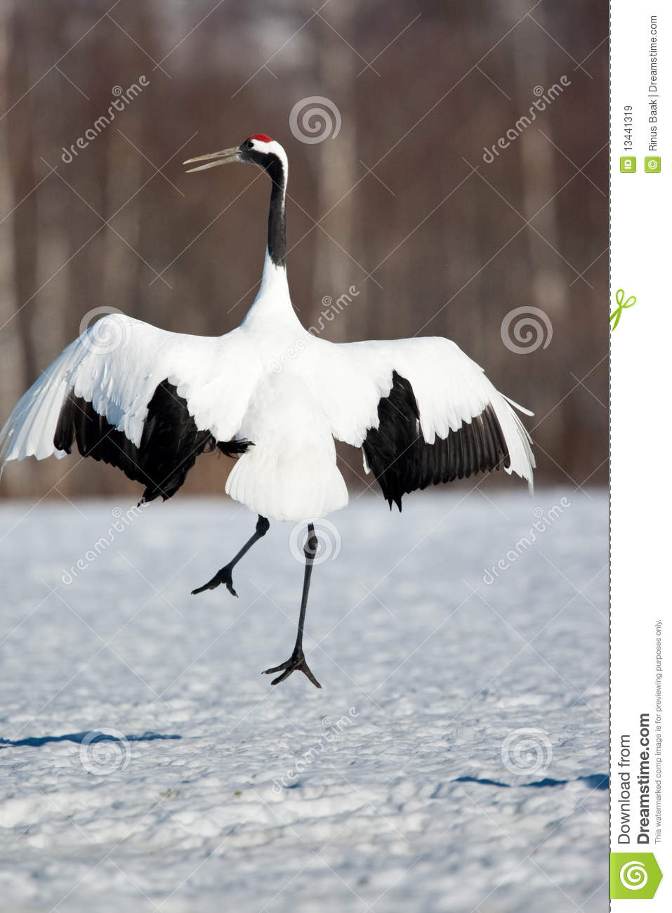 crane asian single women Monitoring at breeding grounds the central asian flock of siberian cranes   one adult female marked on the breeding grounds in 1996 was seen on the.