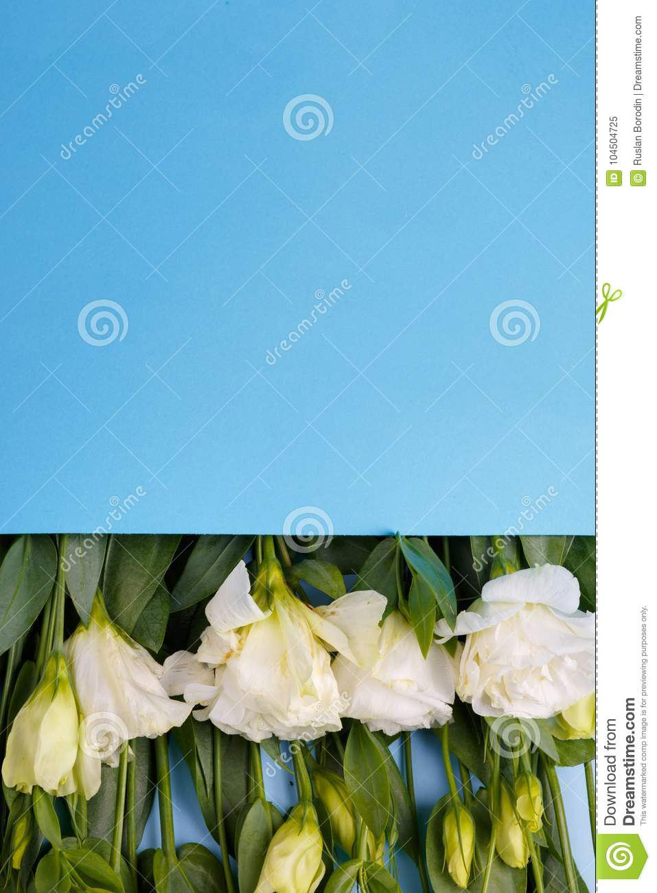 Japanese Roses Lie In A Row In A Blue Envelope Upside Down With A