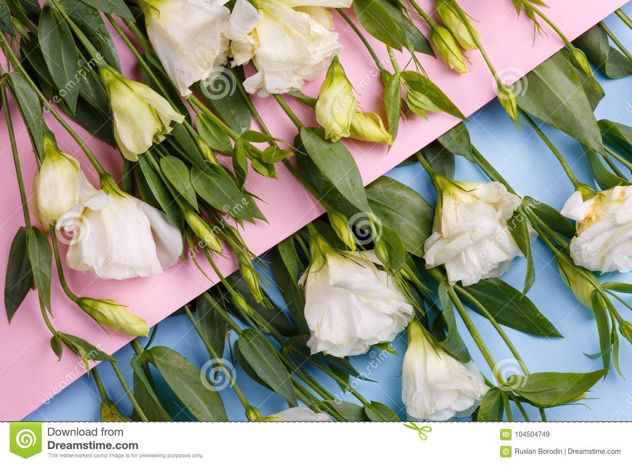 Japanese Roses On A Pink Envelope In Which Roses On A Blue