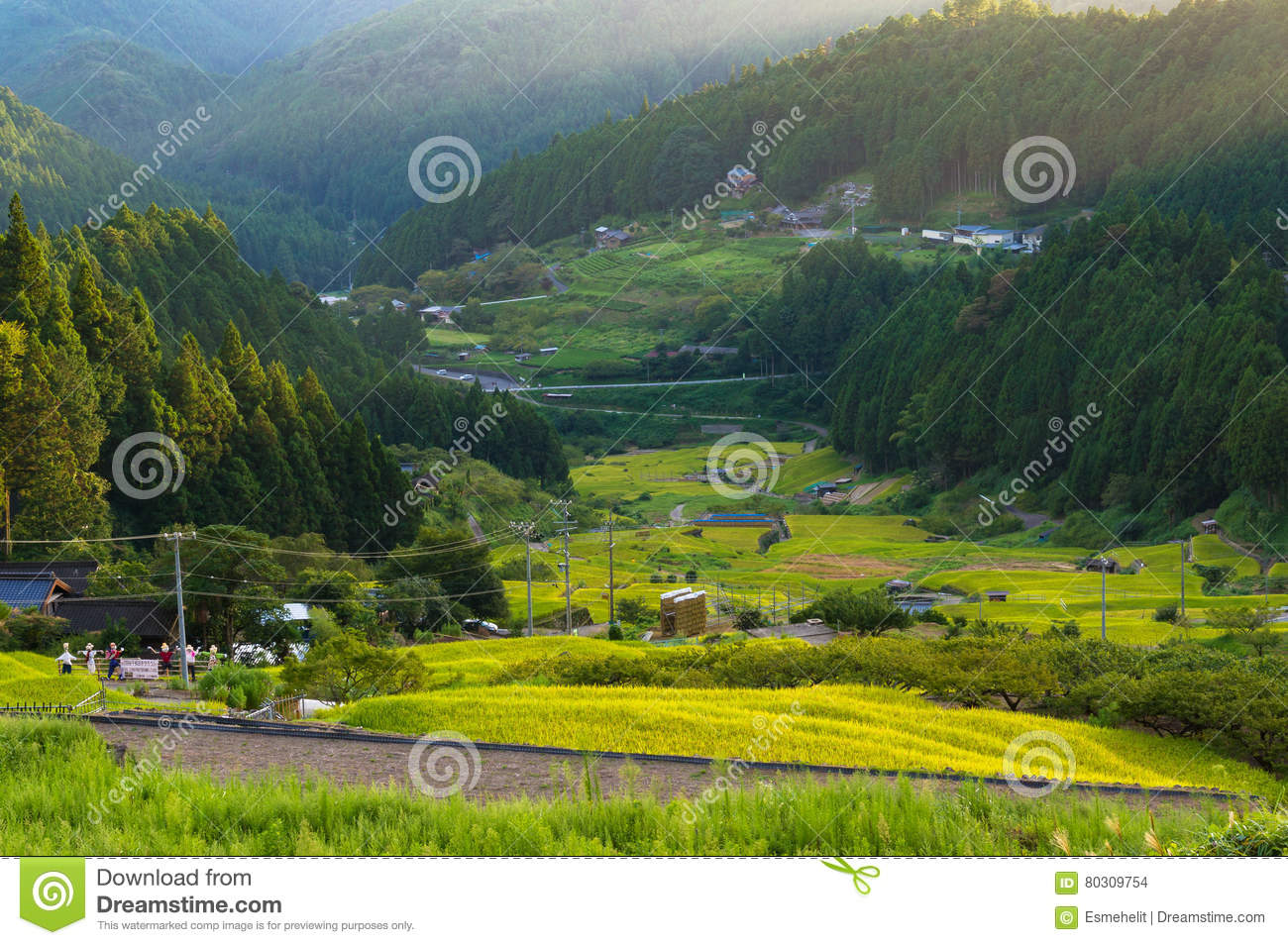 Japanese Rural Landscape With Rice Field Terraces Stock Photo