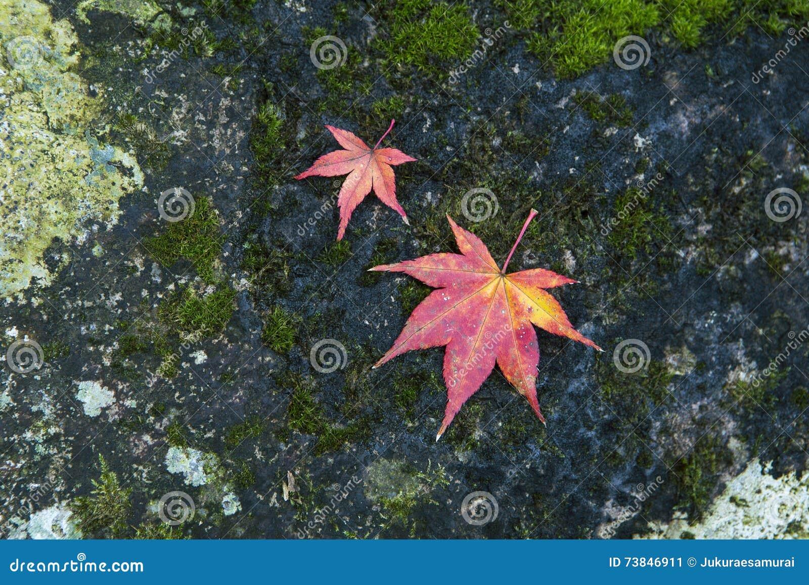 Japanische Ahornblätter auf Stein