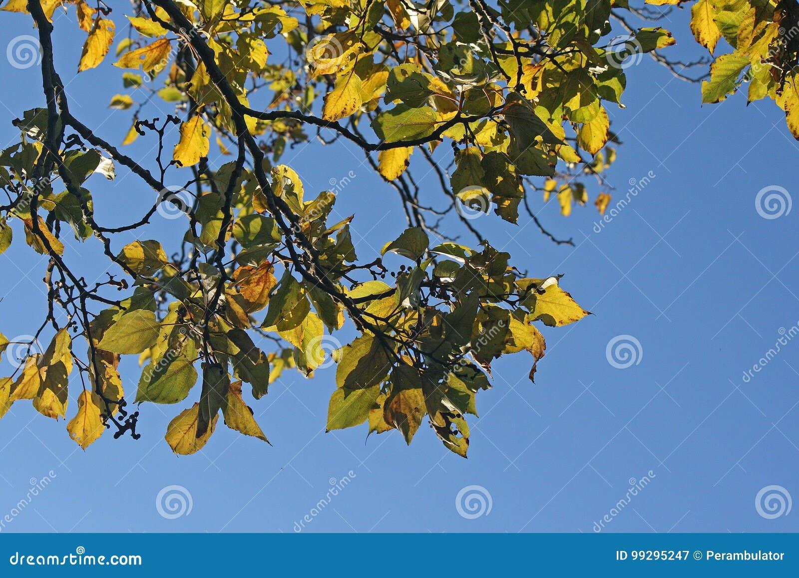 Niedlich Früchte Färbende Blätter Fotos - Malvorlagen Ideen ...