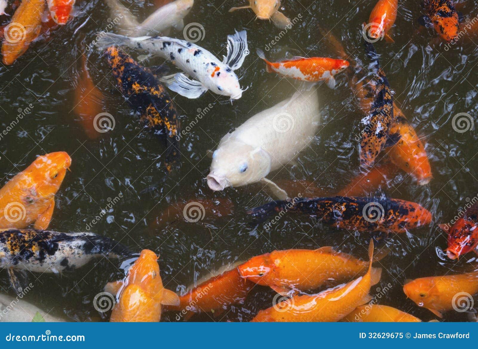 Japanischer koi teich lizenzfreies stockfoto bild 32629675 for Koi teich zugefroren