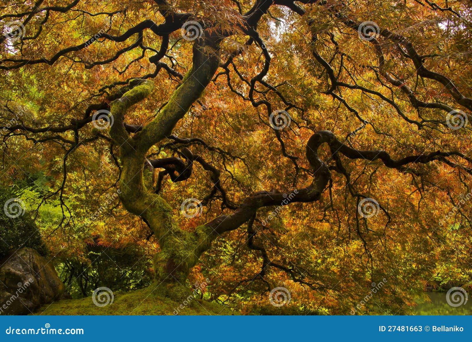 Japanisches Ahornholz