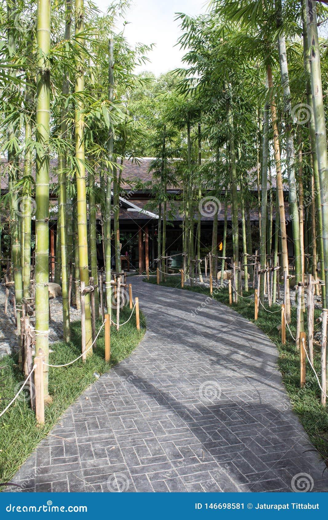 Japanse Bamboetuin in Nekoemon-koffie chiang MAI Thailand