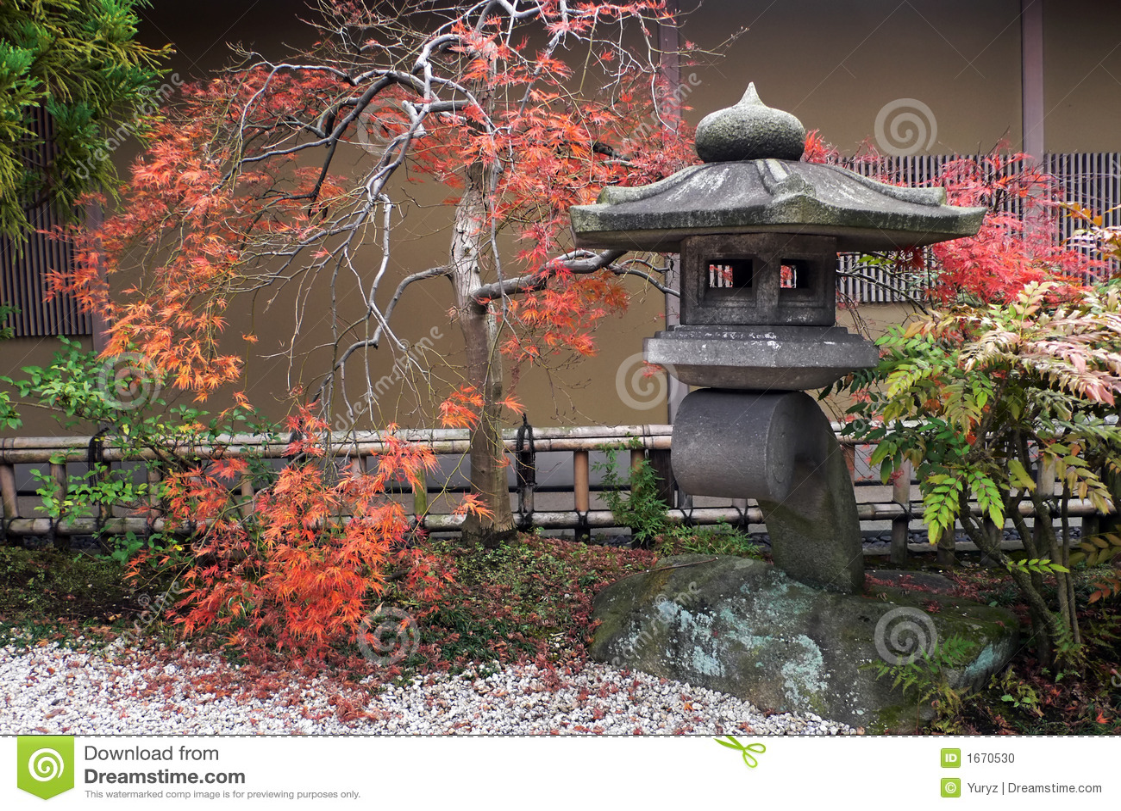 Japanse lantaarn en herfstesdoornboom