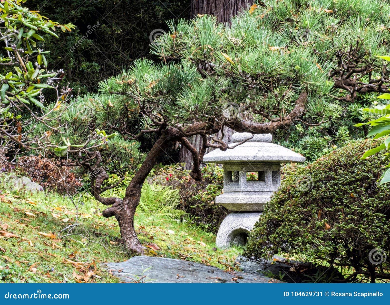 Download Japanse Theetuin, Golden Gatepark, San Francisco, Californië, CA Stock Afbeelding - Afbeelding bestaande uit park, gardening: 104629731