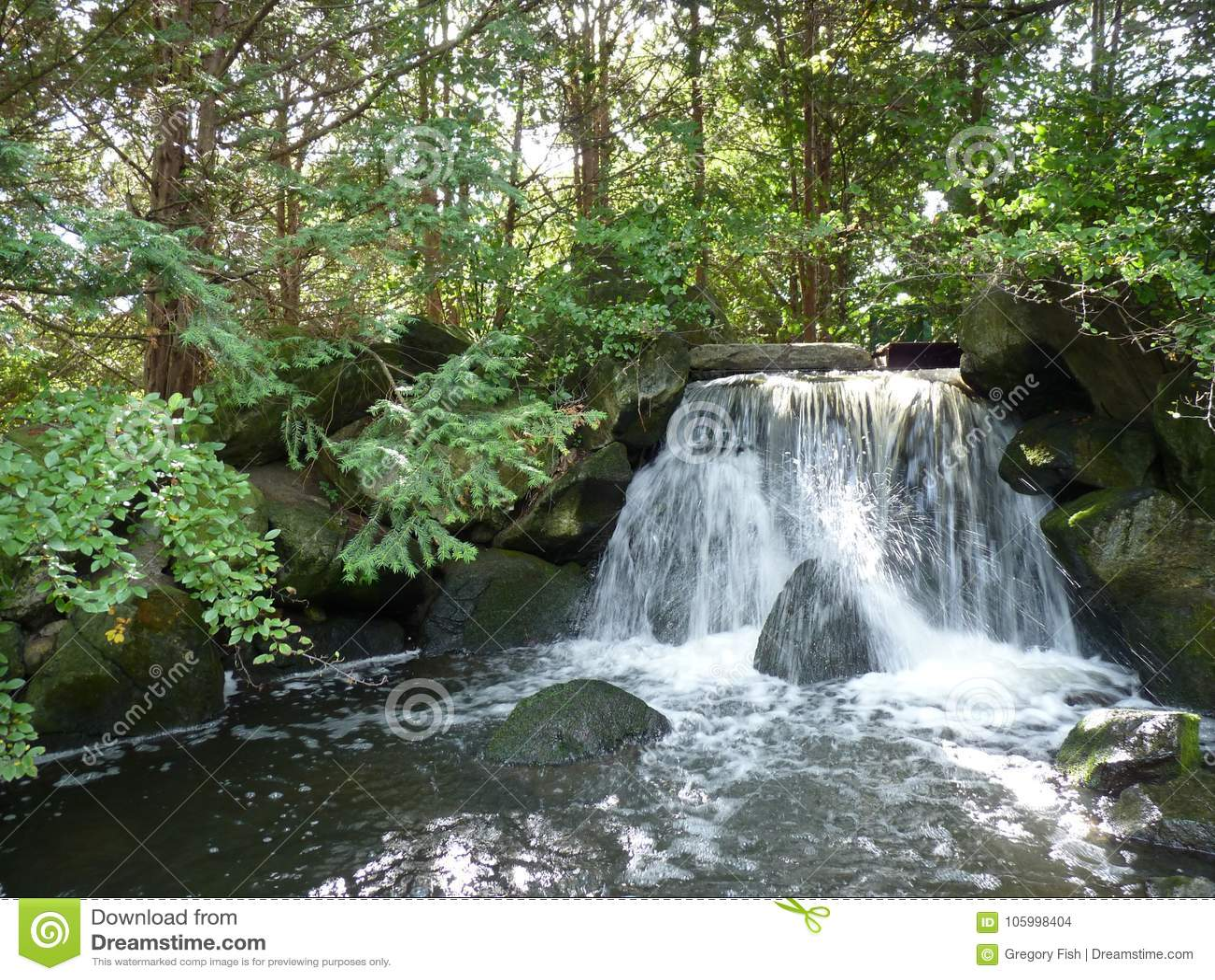 Japanse tuin uitheemse gewassen een vijver stock foto for Een vijver