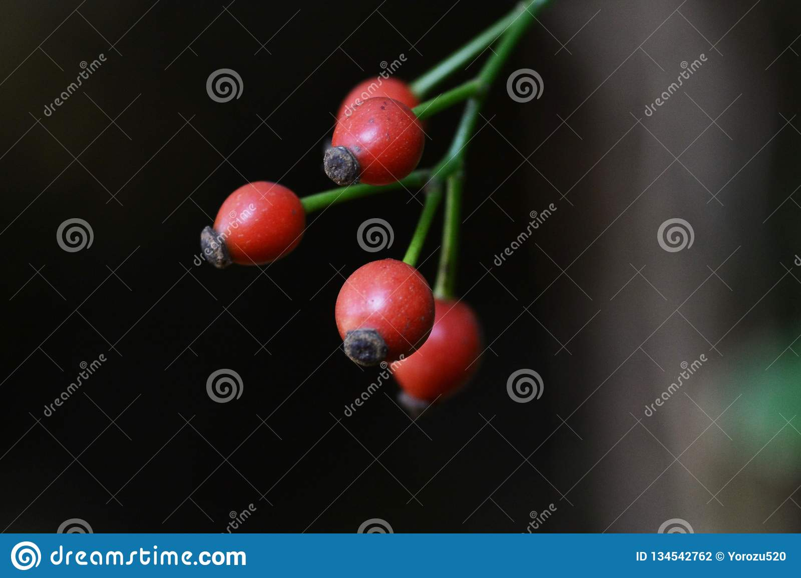 Japanska rosa frukter