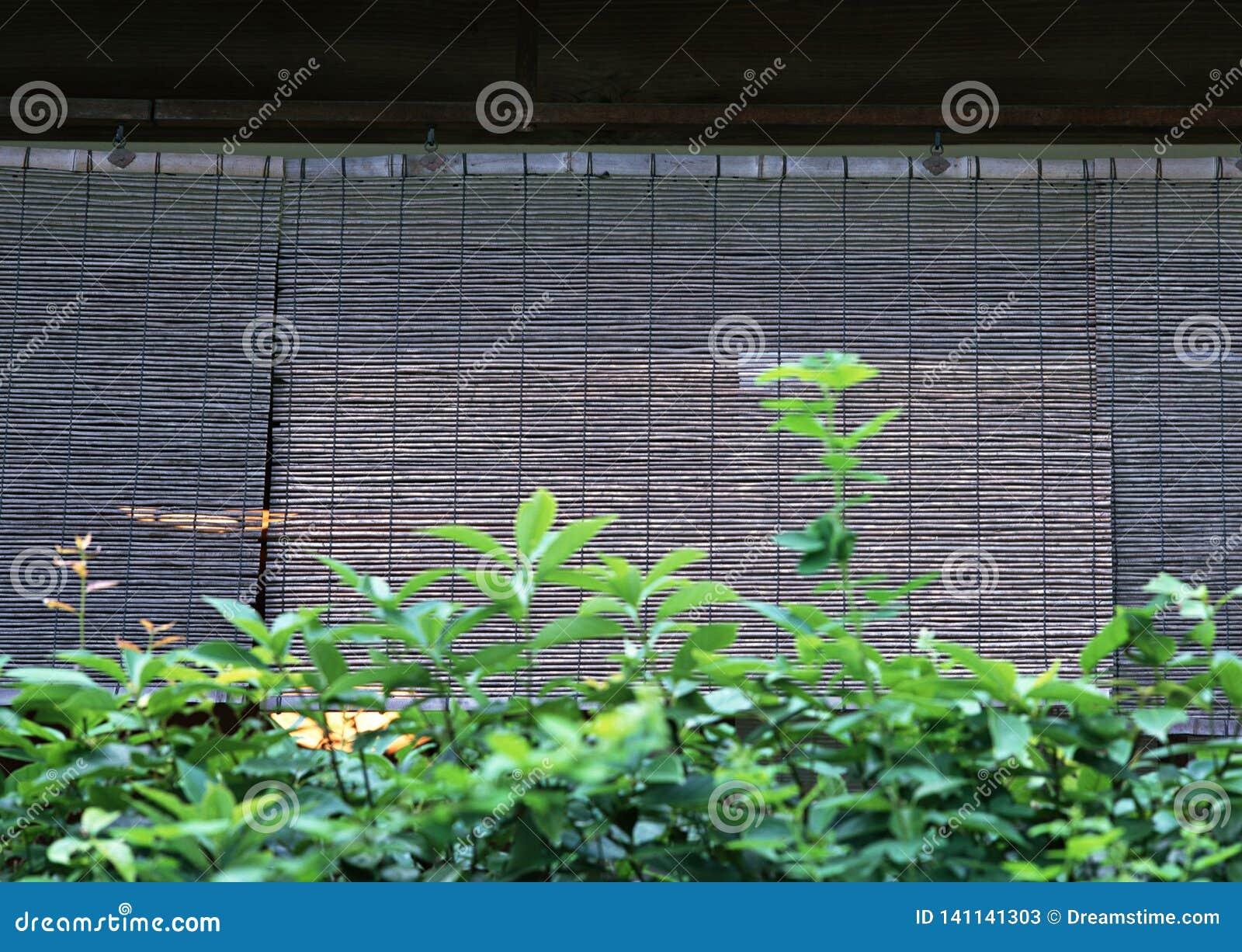 Japońska bambusowa drewniana zasłona dla okno tła