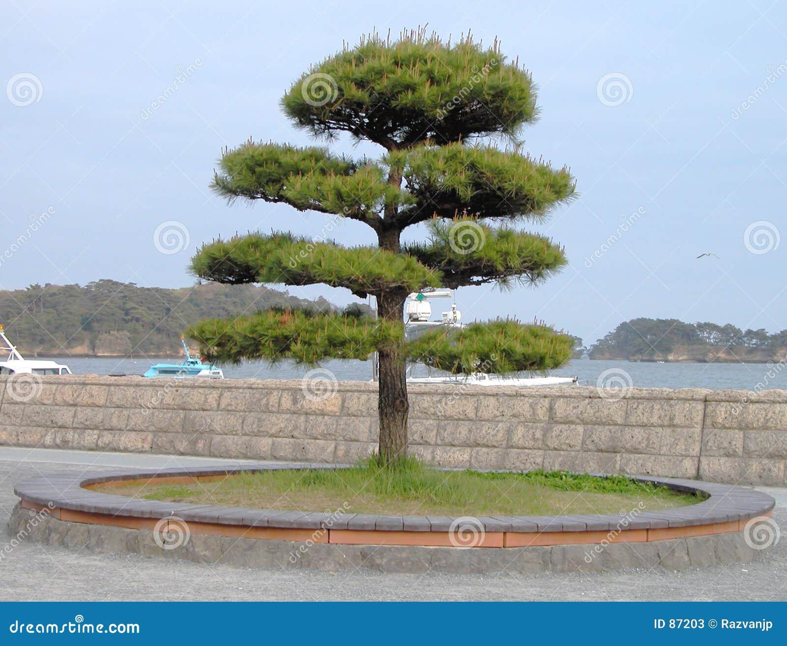 Japoński drzewo