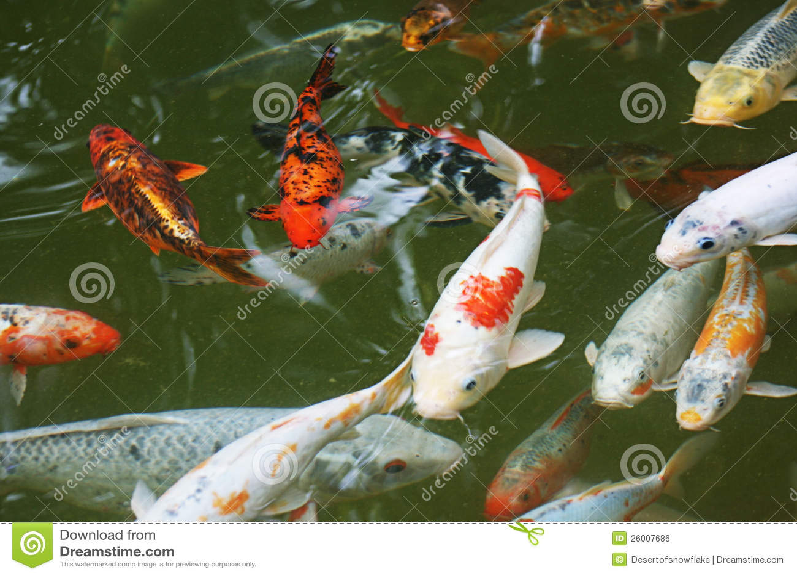Japonia Ryba