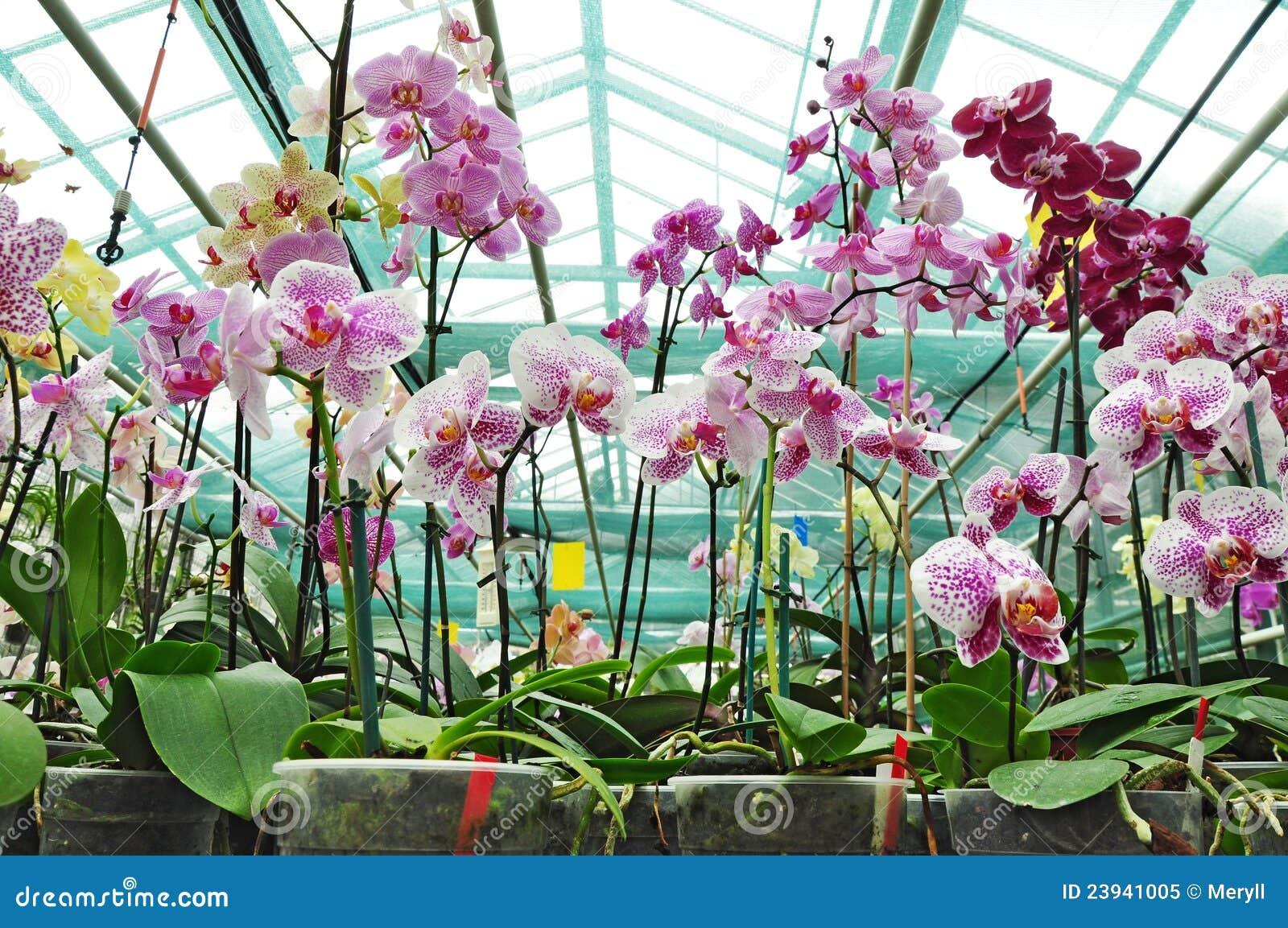 Jard n bot nico plantas de la orqu dea foto de archivo for Hierba jardin