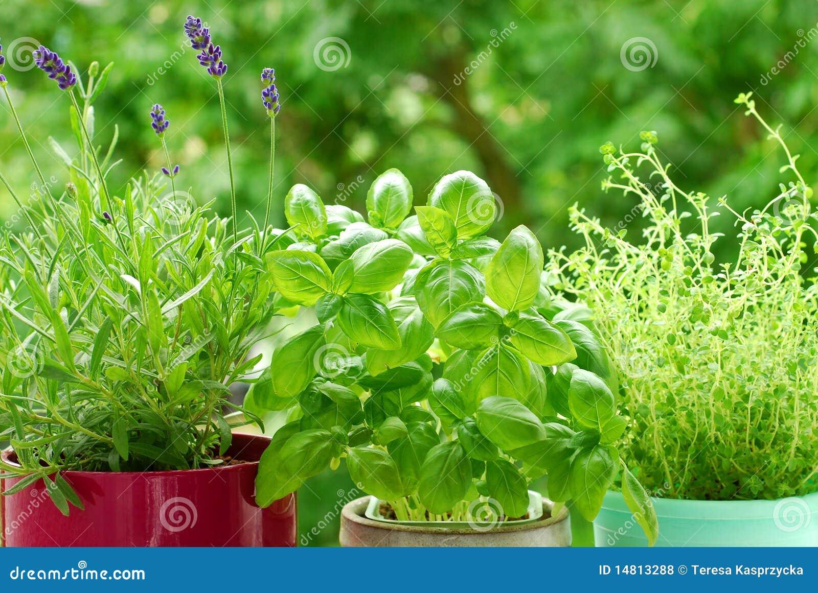 Jardín casero del `s de la hierba