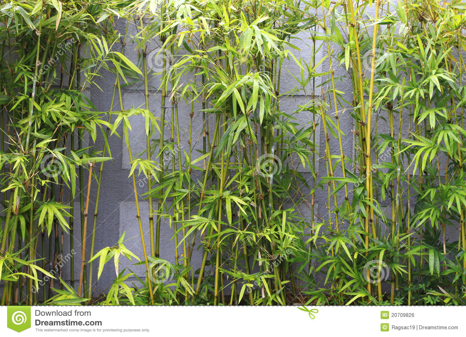 Jardín De Bambú Imagen de archivo libre de regalías  Imagen