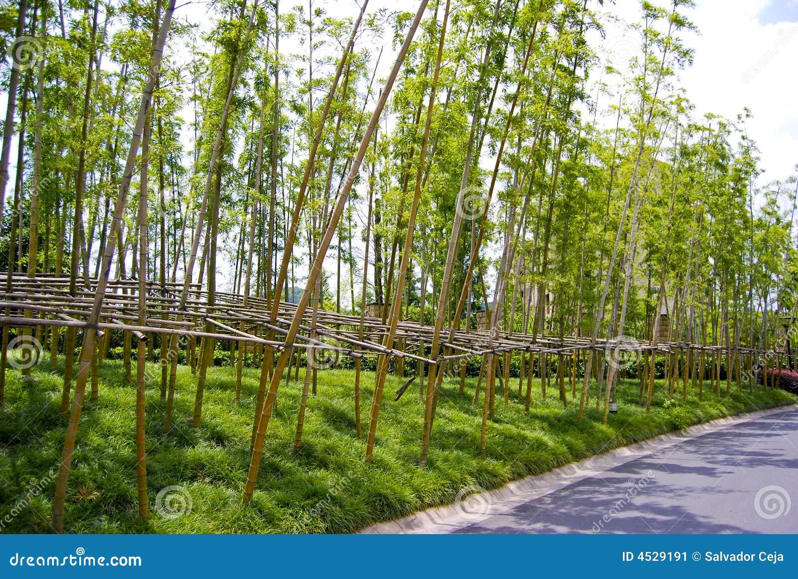 Jard n de bamb for Jardin bambu
